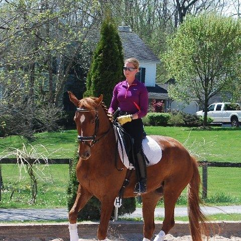 Hanoverian Horses For Sale In Indiana