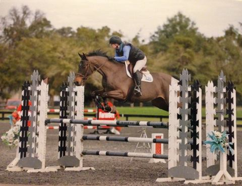 hanoverian    Warmblood Horse for Sale in Fl