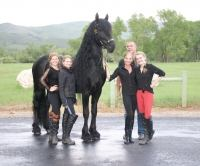 friesian    Big Hair Drafts Baroque Stallion for Stud in Utah