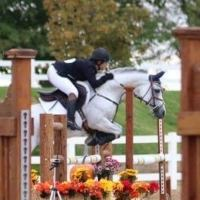arabian    Arabian Stallion for Stud in CA - California