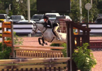 welsh-pony    Drafts Pony Horse for Lease in South carolina