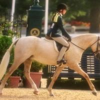 welsh-pony    Drafts Pony Horse for Lease in Texas