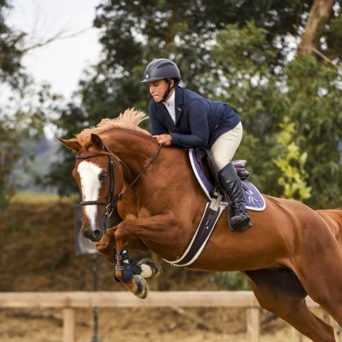 belgian-warmblood    Warmblood Horse for Sale in CA
