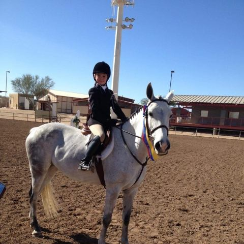 welsh-pony    Pony Horse for Sale in Arizona