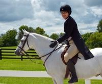 welsh-pony    Drafts Pony Horse for Lease in North Carolina