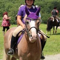 welsh-pony    Drafts Pony Horse for Lease in Ma