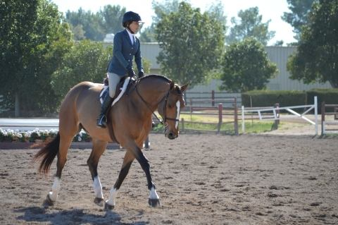 Multi Derby and Big Eq Winner | Horses For Lease | Epona