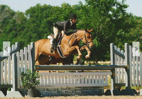welsh-pony   thoroughbred Drafts Pony Thoroughbred Horse for Sale in texas