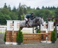 holsteiner    Warmblood Horse for Lease in Oregon
