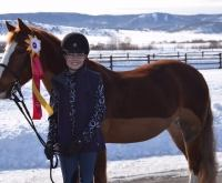 welsh-pony    Drafts Pony Horse for Lease in Colorado