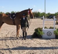 german-warmblood    Warmblood Horse for Lease in Texas