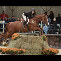 holsteiner    Warmblood Horse for Lease in TN