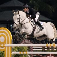 holsteiner    Warmblood Stallion for Stud in Maryland