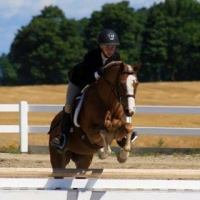 welsh-pony   british-riding-pony Drafts Pony Pony Horse for Lease in Ontario