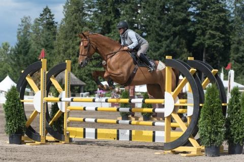 hanoverian    Warmblood Horse for Sale in OR