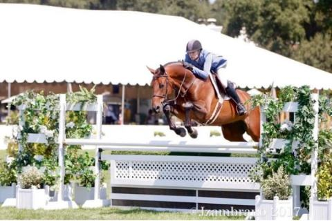 Horses for Sale | Better Horse Classifieds | Epona Exchange