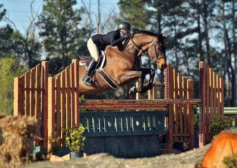 irish-sport-horse    Warmblood Horse for Sale in North Carolina