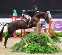 german-warmblood    Warmblood Horse for Lease in GA