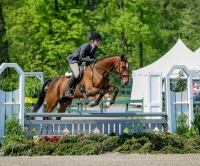 thoroughbred    Thoroughbred Horse for Lease in Maryland