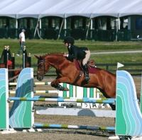 holsteiner    Warmblood Horse for Lease in New Jersey