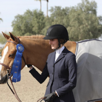 welsh-pony    Drafts Pony Horse for Lease in California