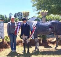 welsh-pony    Pony Horse for Lease in South Carolina
