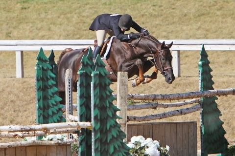 hanoverian    Warmblood Horse for Sale in NC