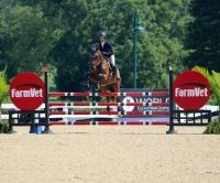 belgian-warmblood    Warmblood Horse for Lease in Kentucky