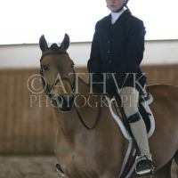 welsh-pony    Drafts Pony Horse for Lease in Ontario