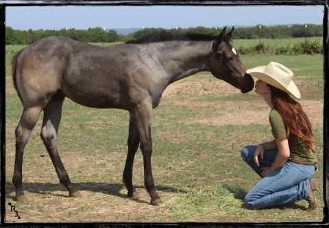 aqha-quarter-horse    Quarter Horse Horse for Sale in Texas