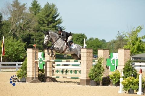 holsteiner    Warmblood Horse for Sale in Michigan