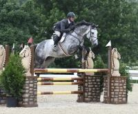 holsteiner    Warmblood Horse for Lease in Michigan