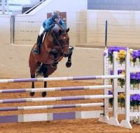 holsteiner    Warmblood Horse for Lease in Texas