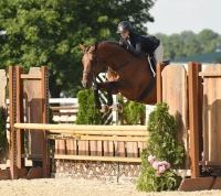 dutch-warmblood    Warmblood Horse for Lease in TN
