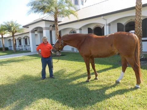 hanoverian    Warmblood Horse for Sale in Florida
