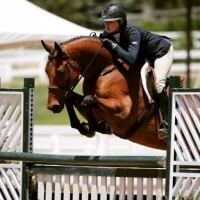 Warmblood    Horse for Lease in Oklahoma