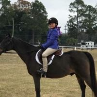 welsh-pony    Drafts Pony Horse for Lease in Georgia