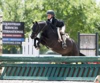 welsh-pony    Drafts Pony Horse for Lease in TX