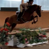 american-sport-pony   welsh-pony Pony Drafts Pony Horse for Lease in on