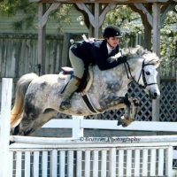 welsh-pony    Drafts Pony Horse for Lease in Virginia
