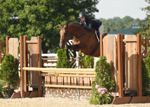 danish-warmblood    Warmblood Horse for Sale in TN