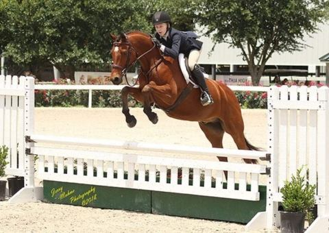 welsh-pony    Drafts Pony Horse for Sale in TX
