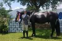 dutch-warmblood    Warmblood Horse for Lease in South Carolina