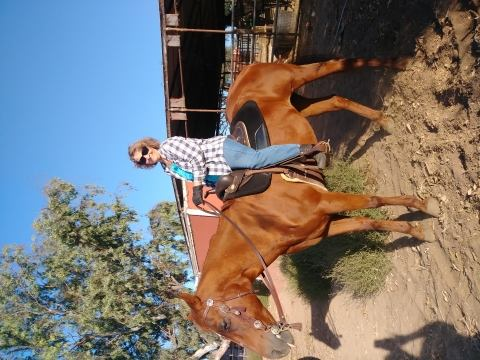 thoroughbred    Thoroughbred Horse for Lease in California