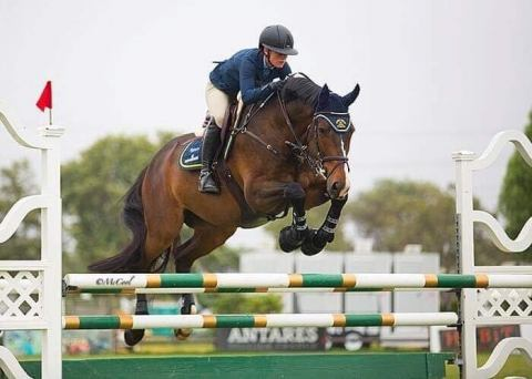 holsteiner    Warmblood Horse for Lease in California