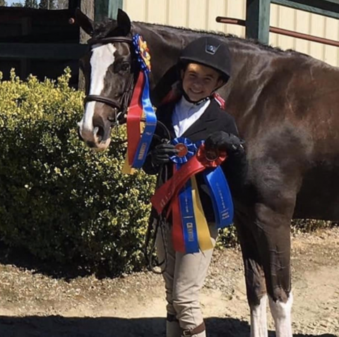 welsh-pony    Drafts Pony Horse for Lease in Tennessee
