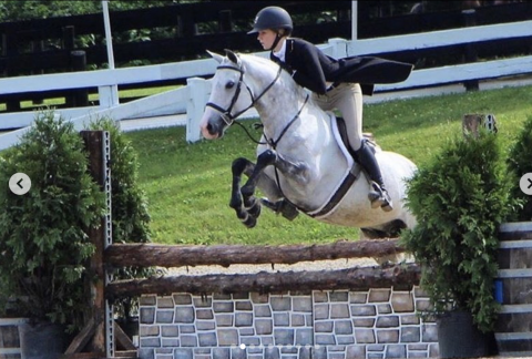 german-warmblood    Warmblood Horse for Sale in Tennessee