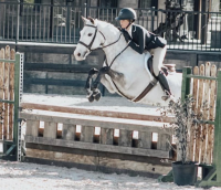 german-warmblood    Warmblood Horse for Lease in Tennessee