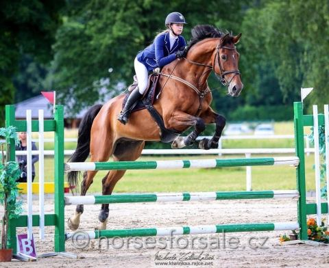 czech-warmblood    Rare and Exotic Warmblood Horse for Sale in Central Europe