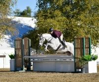 oldenburg    Warmblood Horse for Lease in California